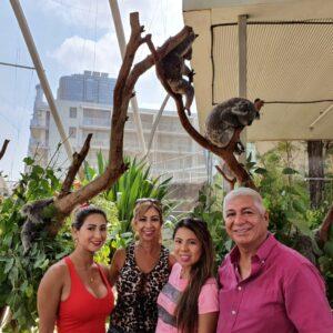 6. Koalas family