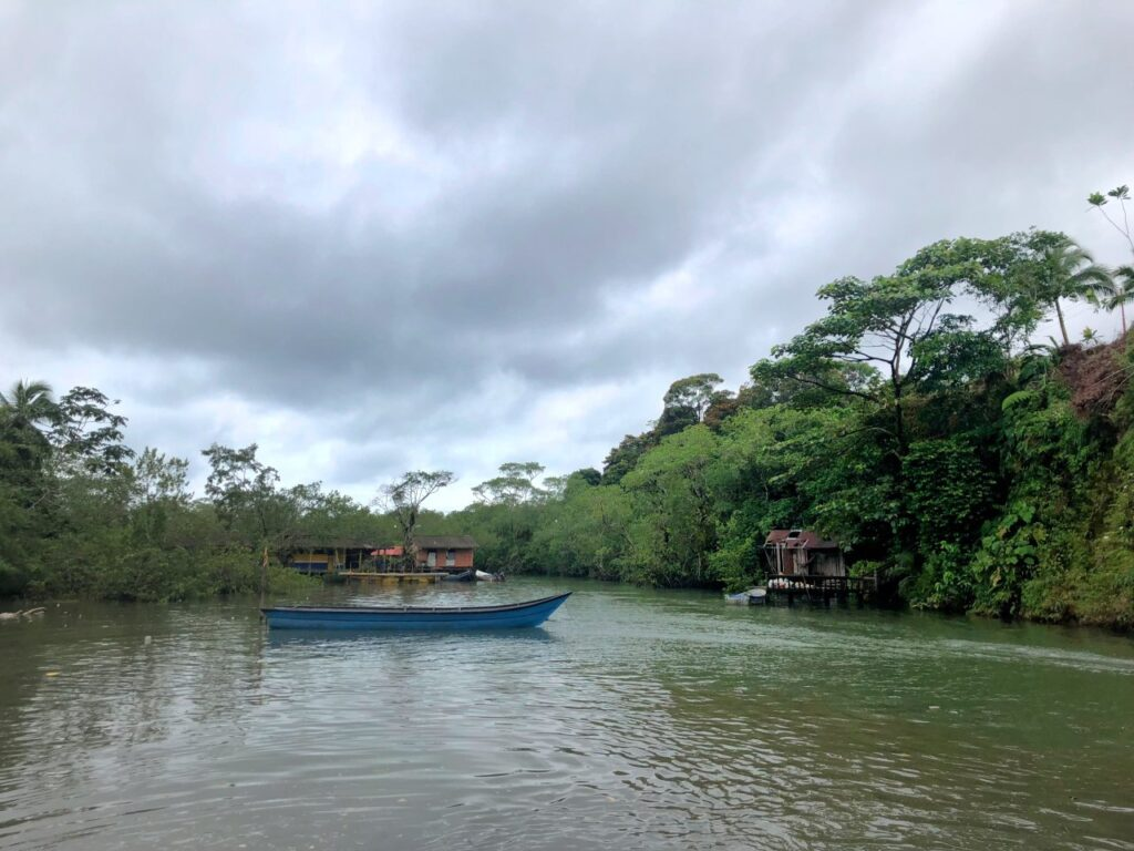 Boat in a mangrove swamp in Juancho, starting point for La Barra